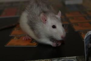 So sieht eine Ratte aus ;)